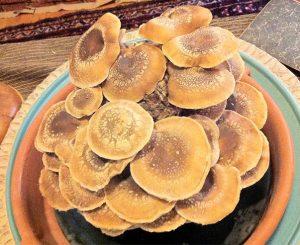 gourmet-mushrooms-shitake