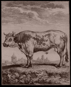 humanely-raised-pastured-beef