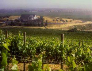 schug-wine-carneros