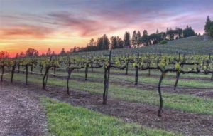 sierra-vista-winery