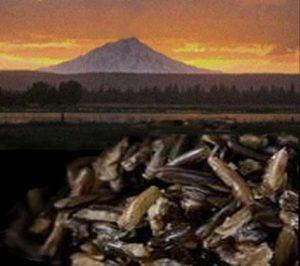 wild-rice-fall-river