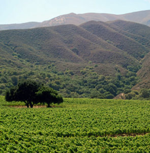 hahn-vineyard-monterey-county